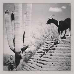 DeGrazia with a goat on the adobe walls of the mission.