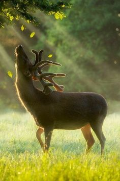 This is one the most majestic buck pictures I've ever seen...how beautiful is he?! Such a handsome creature