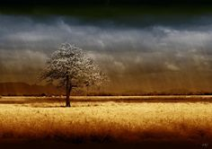 And The Rains Came by Holly Kempe