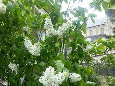 Hungary gardens