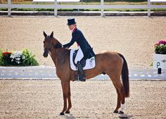 Tina Cook on Billy The Red doing the eventing guinea pig dressage test for team GBR