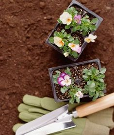 TOP 10 GARDENING MISTAKES ~Digging up flowers instead of weeds. Drowning the tulips. Real Simple readers reveal their growing woes and garden design pros plot out the solutions.