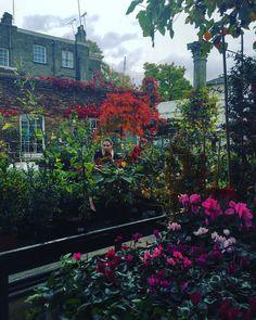 Garden shoping  #london by mertalas