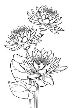 Vector bouquet of outline ornate Lotos or water lily flower and leaf in black isolated on white background. Floral composition with contour Lotus bunch for royalty free illustration Lilies Drawing, Flower Art Drawing, Flower Drawing Tutorials, Leaf Drawing, Lotus Outline, Leaf Outline, Flower Outline, Lotus Flower Art, Lotus Flower Design