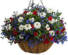 Proven Winners - Top 10 Patriotic Container Recipes in Container Gardening Top Ten Lists Garden Design and Annuals Container Flowers, Container Plants, Container Gardening, Succulent Containers, Vegetable Gardening, Garden Yard Ideas, Garden Planters, Fall Planters, Garden Projects
