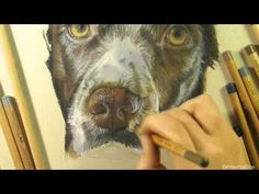 Speed Drawing - Springer Spaniel - YouTube Springer Spaniel, Pastel Pencils, Faber Castell, Pet Portraits, 8 Hours, Painting Tutorials, Drawings, Dogs, Artist