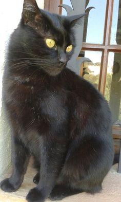 #Cat #chat #kitty #my beautiful #Cachou #Ganguine