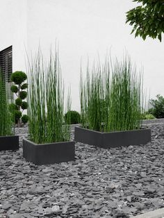 GARTEN Front garden design with horsetail Modern Garden Design, Backyard Garden Design, Landscape Design, Front Yard Landscaping, Landscaping Ideas, Garden Projects, Garden Inspiration, Indoor Plants, Outdoor Gardens