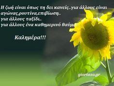 100+- Καλημέρες σε όμορφες εικόνες με λόγια....giortazo.gr - Giortazo.gr Good Morning, Plants, Drink, Food, Buen Dia, Beverage, Bonjour, Bom Dia, Meals