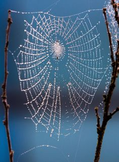 Picture of water droplets revealing the web design of a spider.