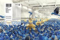 Conservation-International-Blue-macaw