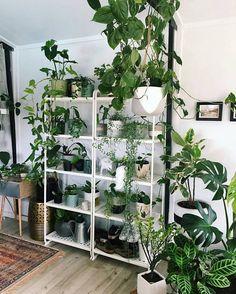 Twee woontrends gecombineerd: stellingrekken én urban jungle planten! // via @plantarchives