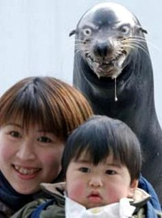 Creepy Seal