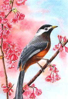 画春天 春天来了,画眉鸟站在枝头看着春暖花开的景色。。。。(本画是水彩画)