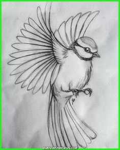 40 Free & Easy Animal Sketch Drawing Information & Ideas - Sketching 40 Free & Easy Animal Information & Ideas - sketching sketch drawing easy - Sketch Drawing Easy Pencil Drawings, Bird Drawings, Art Drawings Sketches, Cool Drawings, People Drawings, Sketches Of Birds, Tattoo Drawings, Drawing People, Easy Drawings Of Animals