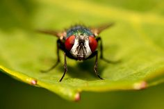 Link #60: Humans Can Control Flies' Minds! - Cool and Interesting Facts for Kids