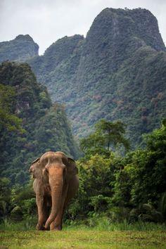 Khao Sok National Park, Thailand - 15 of the World's Wildest Rainforests to Trek Elephant Images, Asian Elephant, Elephant Love, Elephant Art, Elephant Photography, Wildlife Photography, Animal Photography, Photography Jobs, Elephant Sanctuary Thailand