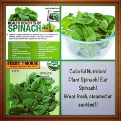 Colorful Nutrition! Eat spinach! It is in season!! Eat fresh! eat local! Grow your own!! #colorfulnutrition #spinach #greens #organic #healthy #health #fitness #vegan #vegetable #garden #gardening #bloodpressure #antioxidants #cardiovascular #vitamins #stroke #delicious