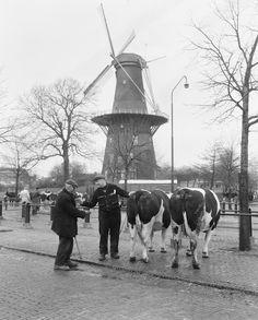 Handjeklap bij Molen de Valk Leiden.