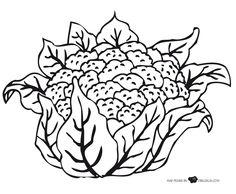 Crafts,Actvities and Worksheets for Preschool,Toddler and Kindergarten.Lots of worksheets and coloring pages. Adult Coloring Book Pages, Animal Coloring Pages, Printable Coloring Pages, Coloring Books, Cauliflower Vegetable, Vegetable Coloring Pages, Fruit Crafts, All About Animals, Fruit Art