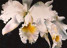 orchid elegance