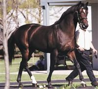 Fusiachi Pegasus(1997) Mr. Prospector- Angel Fever By Danzig. 3x5 To Native Dancer. 5x5 To Almahmoud And Nearco. 9 Starts 6 Wins 2 Seconds. $1,994,400. Won Kentucky Derby(G1), 2nd Preakness (G1),