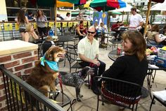 """Have an even happier happy hour - 'Cheers to """"Yappy Hour!"""" Yappy hours' give canines, owners a place to mix and mingle. Photo by Jay Janner/American-Statesman."""