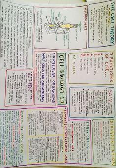 http://muststudyharder.tumblr.com/post/126117167043/inxj-studyblr-ib-biology-chapter-11-notes