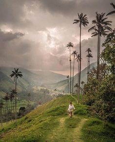Cocora Valley Visit Colombia, Colombia Travel, Colombia Country, Where To Go, Adventure Travel, Caribbean, Scenery, Places To Visit, In This Moment