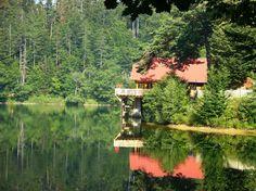 Lacul Buhui – primul lac artificial din România FOTO Turism Romania, Bird Feeders, Places To Go, Europe, Outdoor Decor, Travel, Houses, Romania, Viajes