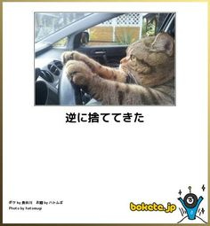 猫の画像大喜利 Animals And Pets, Funny Animals, Cute Animals, Funny Animal Pictures, Funny Images, Funny Photos, Cute Cats, Funny Cats, Japanese Funny