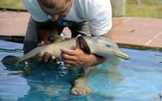 new born dolphin