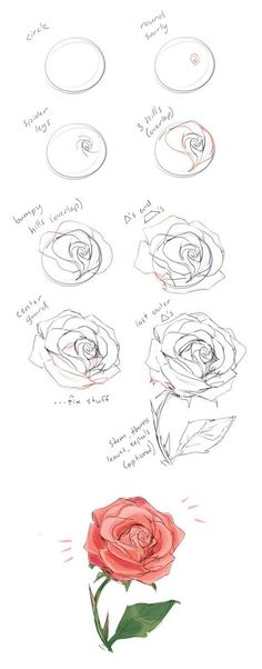 How to draw a rose tutorial by cherrimut on tumblr: