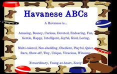 Do you know the #Havanese #ABC's? #RoyalFlushHavanese #DogLovers #Puppiesforsale #HaveAHavanese
