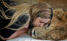 Ariel, a paralyzed, 3-yr-old lion being kissed by his veterinarian a couple weeks before his degenerative disease stole him away.