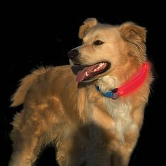 Nite Dawg LED Collar Cover