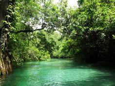 Weeki Wachee River, FL