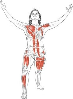 5 stretches to beat back pain  the shoulder namaste and