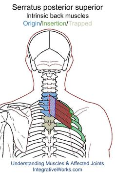 Understanding Trigger Points - Hard to reach pain under the shoulder blade