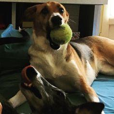 #maya #guapo #dayoff #dogs #dogstagram #instadog #relax #playtime #family