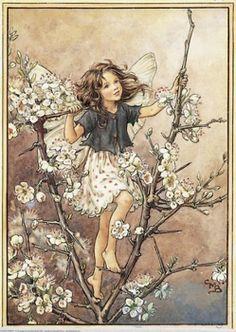 Cicely Mary Barker - Flower Fairies of the Winter Fairy Dust, Fairy Land, Cicely Mary Barker, Fairy Shoes, Fairy Village, Fairytale Fantasies, Elfen, Flower Fairies, Botanical Art