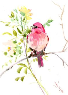Your place to buy and sell all things handmade Rosefinch X original watercolor painting by ORIGINALONLY on Etsy Watercolor Bird, Watercolor Animals, Simple Watercolor, Watercolor Paintings For Beginners, Bird Drawings, Paintings I Love, Painting & Drawing, Painting Abstract, Bird Art