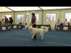 Světová výstava psů Salzburg 2012 - YouTube