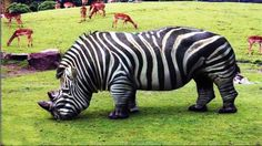 20 Bizarre Hybrid Animal That Actually Exist. The picture is rubbish as there isn't an animal like it in the whole set.