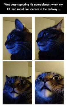 Cats are hilarious! #ScaredyCat #SpiritAnimal