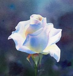"""WORLD OF LIGHT watercolor flower white rose painting"" - Original Fine Art for Sale - � Barbara Fox"