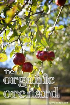the organic orchard -a podcast   (been listening to this today- a bunch of great info!)