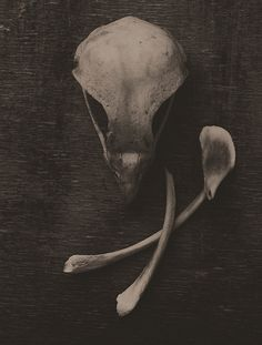 Bird Bones by thorburn, via Flickr