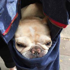 dog イヌ 犬可愛い画像まとめ http://ift.tt/1TXl4jx