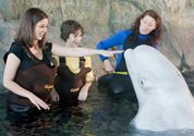 Head over to the Shedd Aquarium in the morning for a 90 minute Beluga Encounter and 30 minute Penguin Encounter. Chicago Attractions, Kids Attractions, Places In Chicago, Shedd Aquarium, Local Museums, Programming For Kids, Before I Die, I Want To Travel, Baby Animals